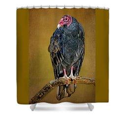 Turkey Vulture Shower Curtain by Nikolyn McDonald