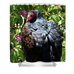 Turkey Vulture Portrait . R6805 Shower Curtain by Wingsdomain Art and Photography
