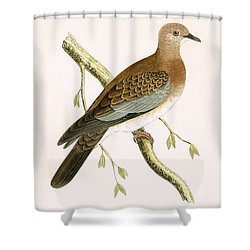 Turtle Dove Shower Curtain by English School