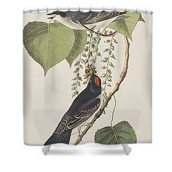 Tyrant Fly Catcher Shower Curtain by John James Audubon