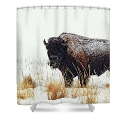 Under The Snow Shower Curtain by Joan Escala