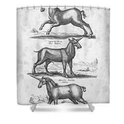Unicorns 02 Historiae Naturalis 1657 Shower Curtain by Aged Pixel
