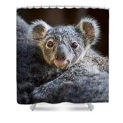 Up Close Koala Joey Shower Curtain by Jamie Pham
