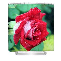 Very Dewy Rose Shower Curtain by Kristin Elmquist