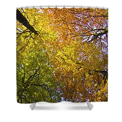View To The Top Of Beech Trees Shower Curtain by Heiko Koehrer-Wagner