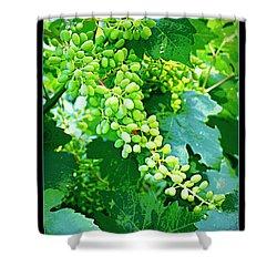 Vintage Vines  Shower Curtain by Carol Groenen