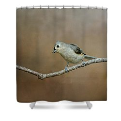 Visiting Tufted Titmouse Shower Curtain by Jai Johnson
