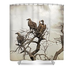 Vultures In A Dead Tree.  Shower Curtain by Jane Rix