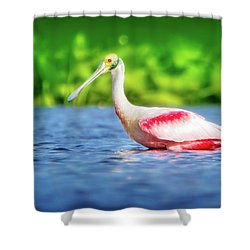 Wading Spoonbill Shower Curtain by Mark Andrew Thomas