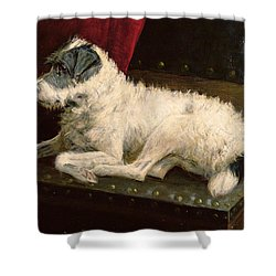 Waiting For Master Shower Curtain by George Paice