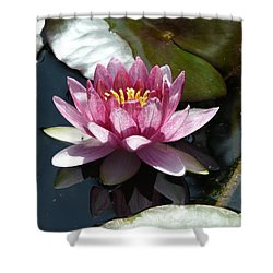 Water Lily 2 Shower Curtain by Valerie Ornstein