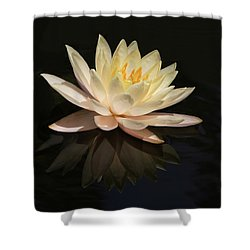 Water Lily Reflected Shower Curtain by Sabrina L Ryan