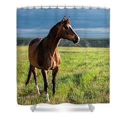 Western Stallion Shower Curtain by Todd Klassy