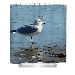 Wet Feet Shower Curtain by Paul Sachtleben