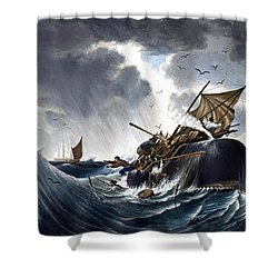 Whale Destroying Whaling Ship Shower Curtain by American School