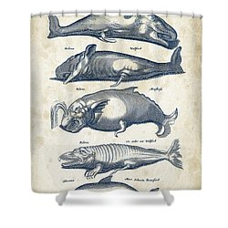 Whale Historiae Naturalis 08 - 1657 - 41 Shower Curtain by Aged Pixel