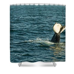 Whale Shower Curtain by Sebastian Musial