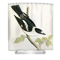 White Collared Flycatcher Shower Curtain by English School