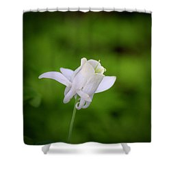 White Columbine Squared Shower Curtain by Teresa Mucha