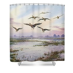 White-fronted Geese Alighting Shower Curtain by Carl Donner