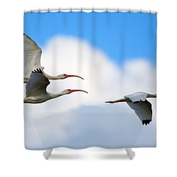 White Ibis Flock Shower Curtain by Mike Dawson
