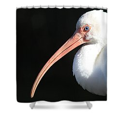 White Ibis Profile Shower Curtain by Carol Groenen