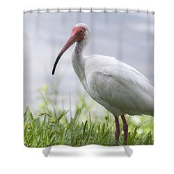 White Ibis  Shower Curtain by Saija  Lehtonen