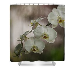 White Of The Evening Shower Curtain by Mike Reid