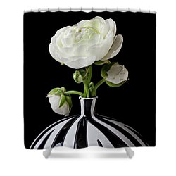 White Ranunculus In Black And White Vase Shower Curtain by Garry Gay