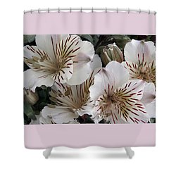 White Tiger Azalea Shower Curtain by Ben and Raisa Gertsberg