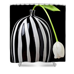White Tulip In Striped Vase Shower Curtain by Garry Gay