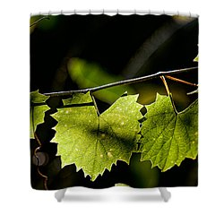 Wild Grape Leaves Shower Curtain by Christopher Holmes