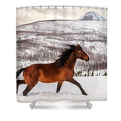 Wild Horse Shower Curtain by Todd Klassy