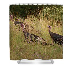 Wild Turkeys Shower Curtain by Michael Peychich