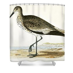 Willet Shower Curtain by English School