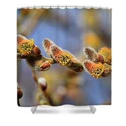 Willow Buds Shower Curtain by Donna Kennedy