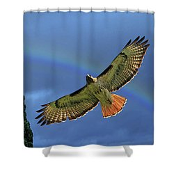 Wings 2 Shower Curtain by Donna Kennedy