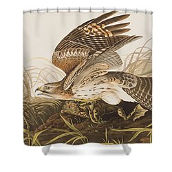 Winter Hawk Shower Curtain by John James Audubon