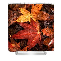 With Love - Autumn Pond Shower Curtain by Theresa  Asher
