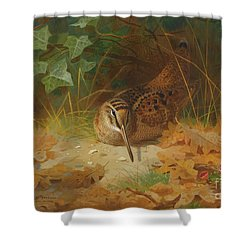 Woodcock Shower Curtain by Celestial Images