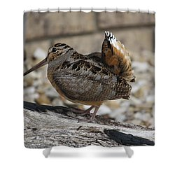 Woodcock Shower Curtain by Donna  Smith