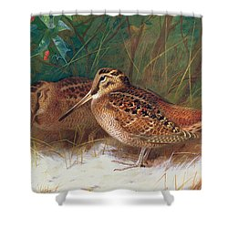 Woodcock In The Undergrowth Shower Curtain by Archibald Thorburn