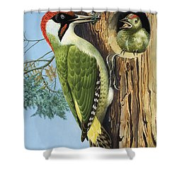 Woodpecker Shower Curtain by RB Davis