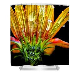 Yellow And Orange Wet Zinnias. Shower Curtain by Elizabeth Greene