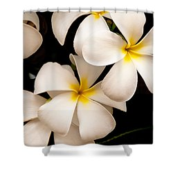 Yellow And White Plumeria Shower Curtain by Brian Harig