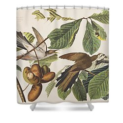 Yellow Billed Cuckoo Shower Curtain by John James Audubon