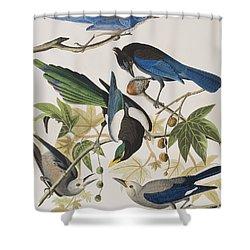 Yellow-billed Magpie Stellers Jay Ultramarine Jay Clark's Crow Shower Curtain by John James Audubon