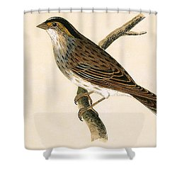 Yellow Browed Bunting Shower Curtain by English School