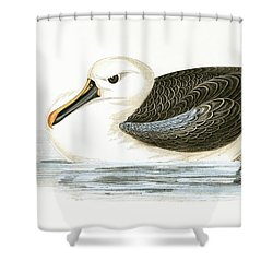 Yellow Nosed Albatross Shower Curtain by English School