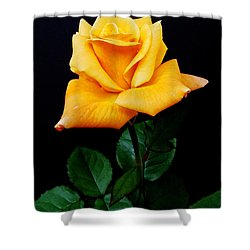 Yellow Rose Shower Curtain by Michael Peychich